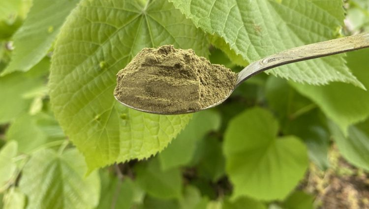 Along With The Benefits, Kratom Tea Offers Risks To Their Users! – See Details Here!!