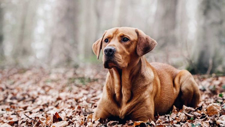 How Can A Person Select The Best Online Pet Shop?